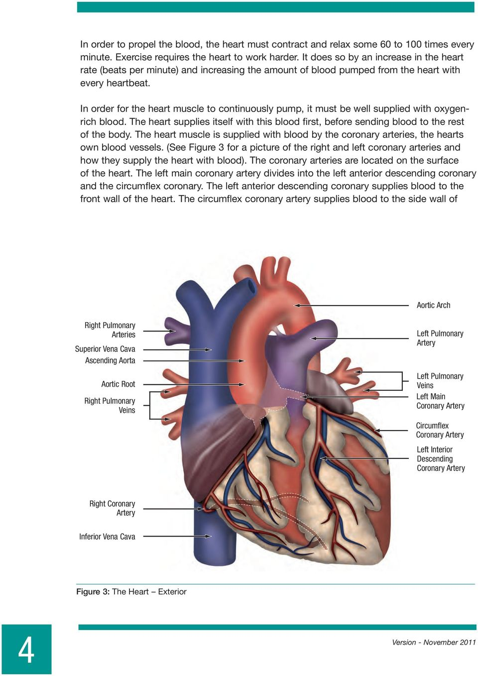In order for the heart muscle to continuously pump, it must be well supplied with oxygenrich blood. The heart supplies itself with this blood first, before sending blood to the rest of the body.