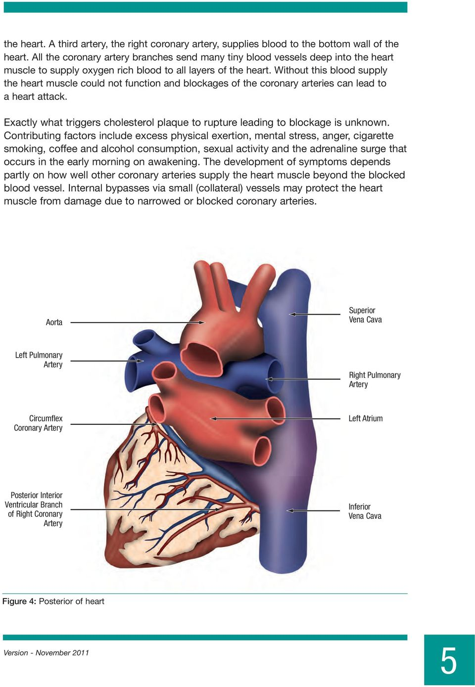 Without this blood supply the heart muscle could not function and blockages of the coronary arteries can lead to a heart attack.
