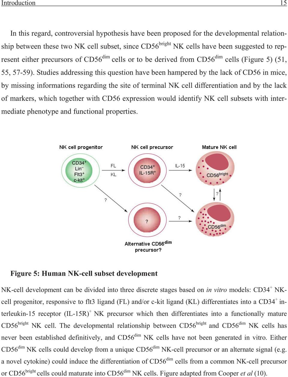 Studies addressing this question have been hampered by the lack of CD56 in mice, by missing informations regarding the site of terminal NK cell differentiation and by the lack of markers, which