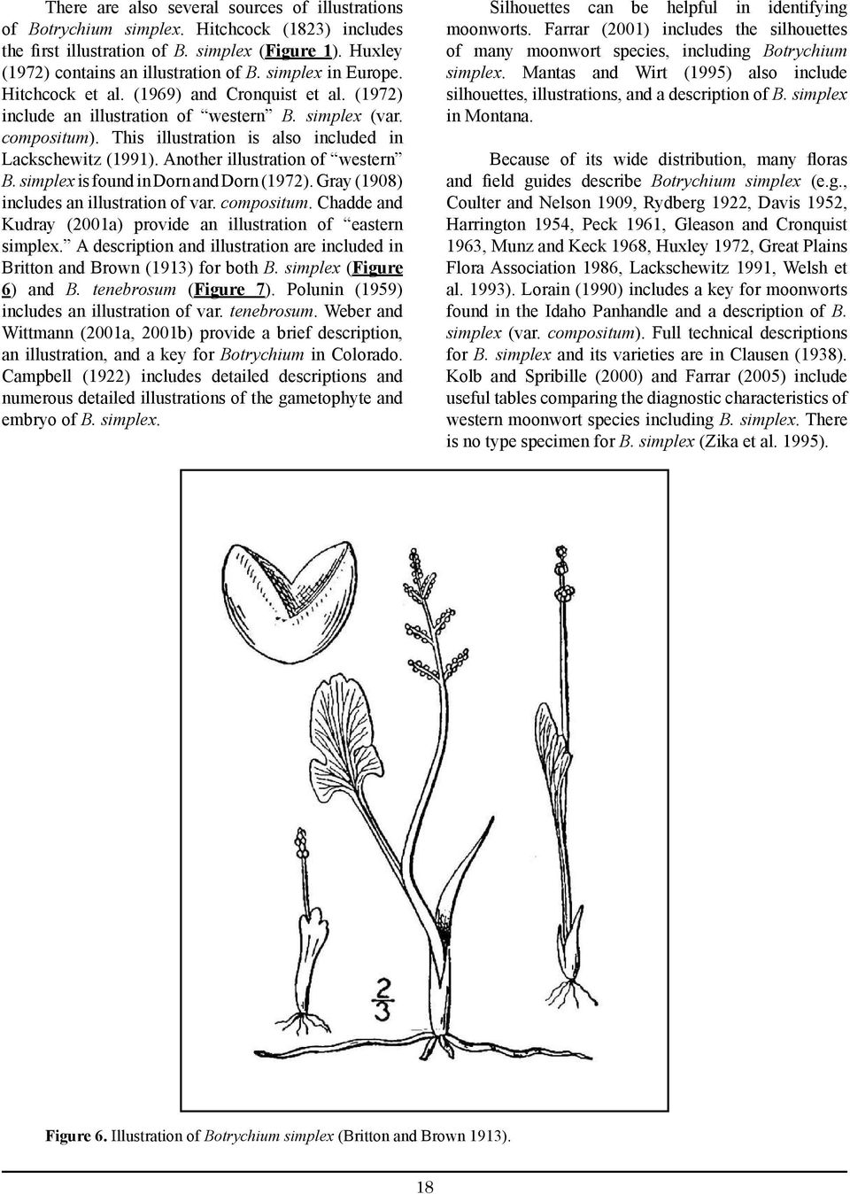 Another illustration of western B. simplex is found in Dorn and Dorn (1972). Gray (1908) includes an illustration of var. compositum.