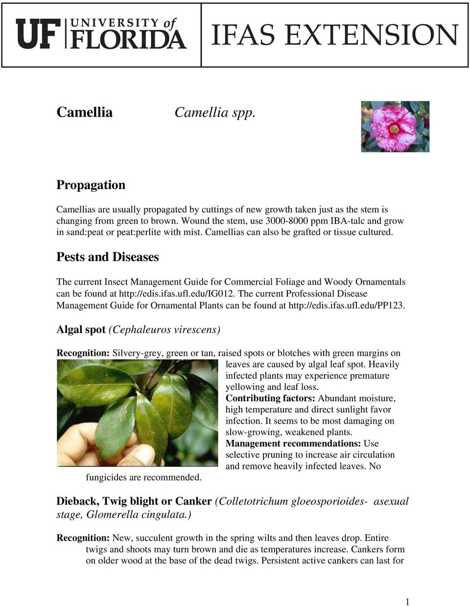 Pests and Diseases The current Insect Management Guide for Commercial Foliage and Woody Ornamentals can be found at http://edis.ifas.ufl.edu/ig012.