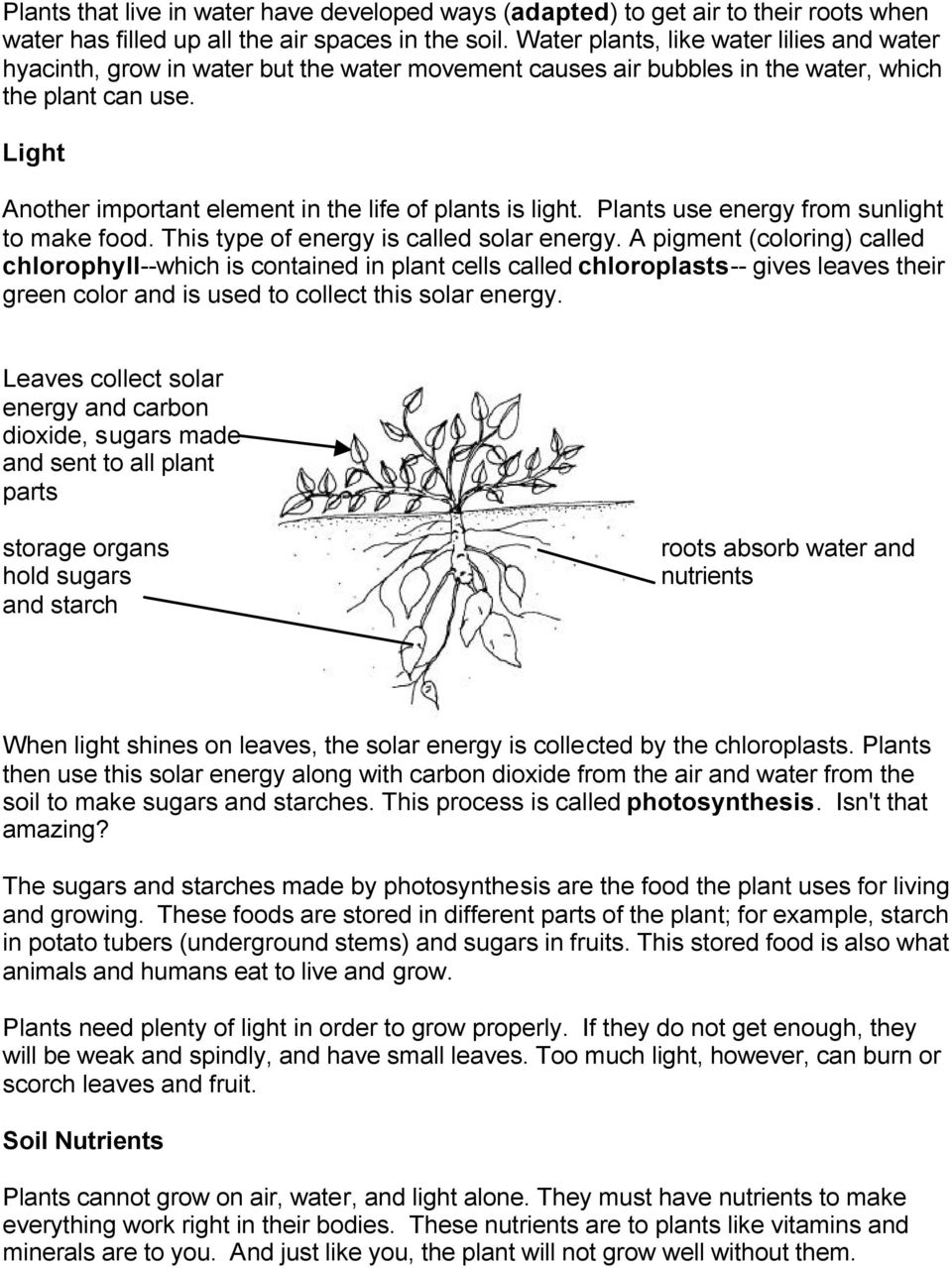 Light Another important element in the life of plants is light. Plants use energy from sunlight to make food. This type of energy is called solar energy.