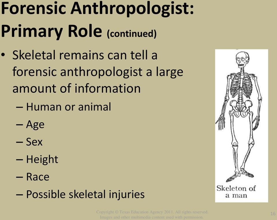 anthropologist a large amount of information