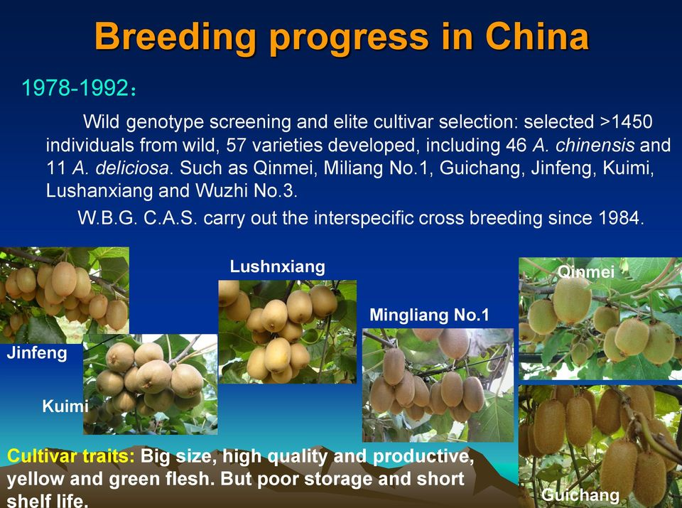 1, Guichang, Jinfeng, Kuimi, Lushanxiang and Wuzhi No.3. W.B.G. C.A.S. carry out the interspecific cross breeding since 1984.