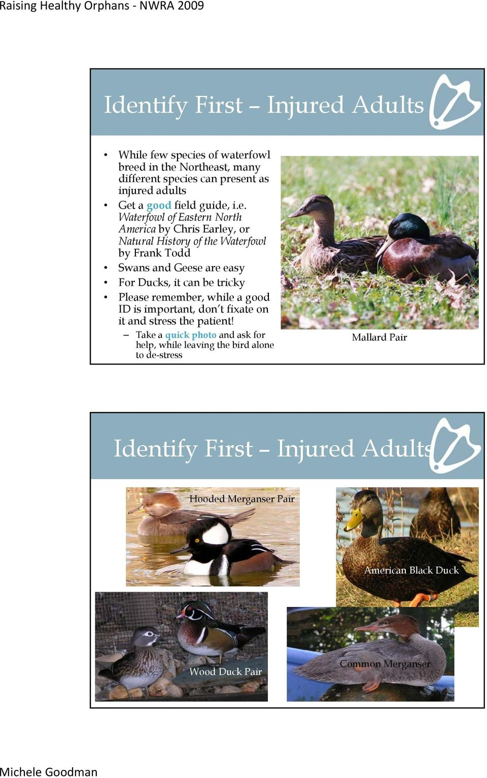 Ducks, it can be tricky Please remember, while a good ID is important, don t fixate on it and stress the patient!
