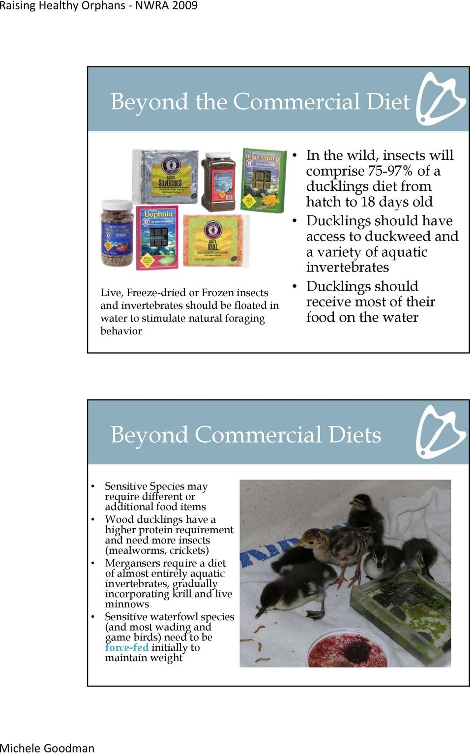 Commercial Diets Sensitive Species may require different or additional food items Wood ducklings have a higher protein requirement and need more insects (mealworms, crickets) Mergansers require