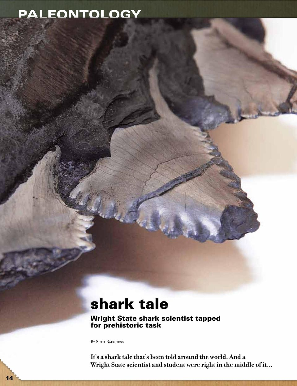 shark tale that s been told around the world.
