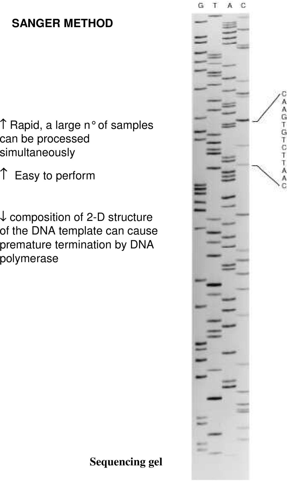 composition of 2-D structure of the DNA template