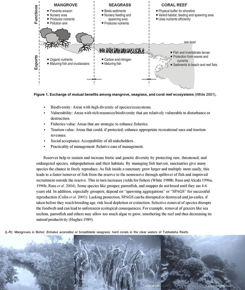 invertebrate larvae Protection from waves and currents Sediments to beach and reef flats Figure 1. Exchange of mutual benefits among mangrove, seagrass, and coral reef ecosystems (White 2001).