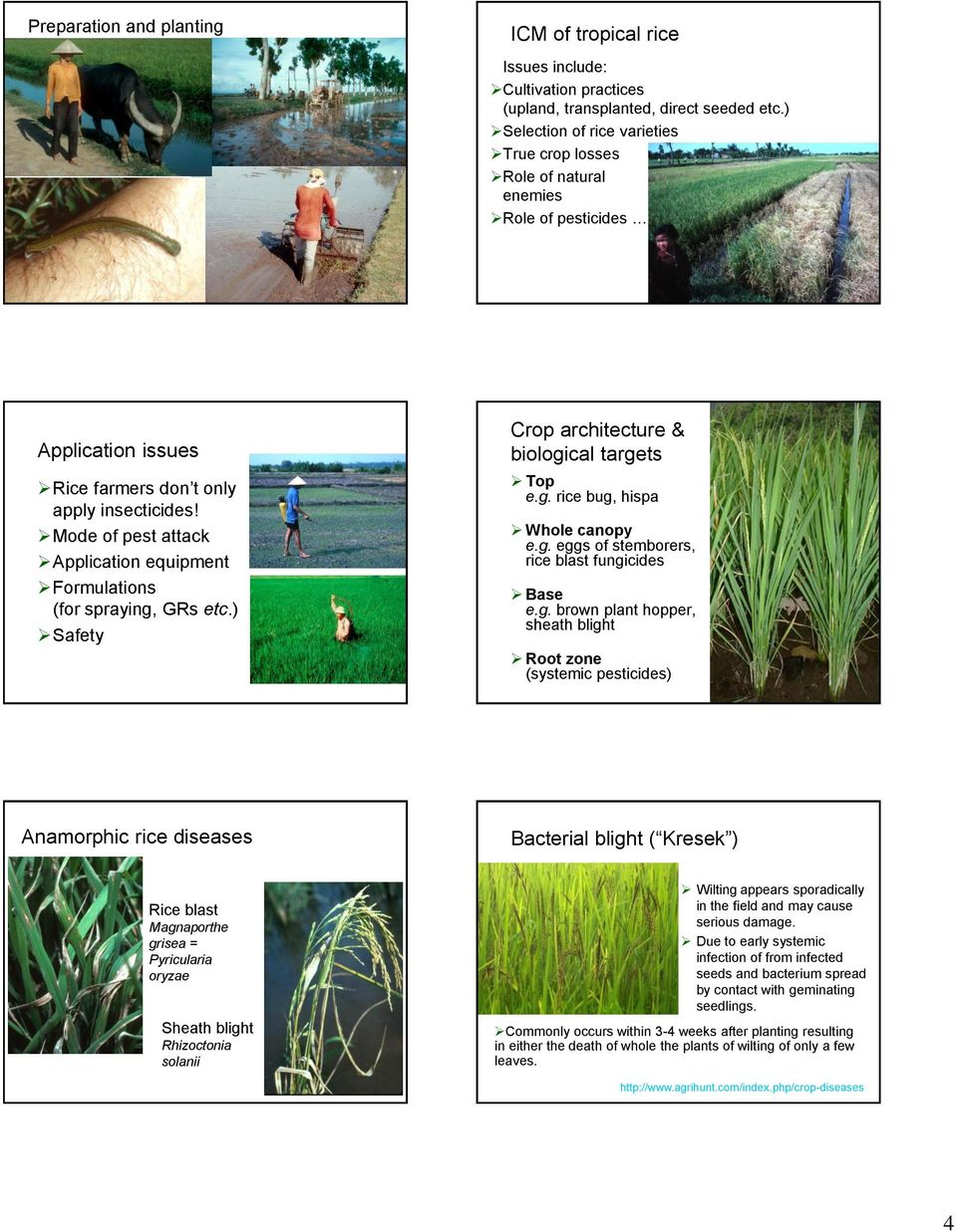 Mode of pest attack Application equipment Formulations (for spraying, GRs etc.) Safety Crop architecture & biological targets Top e.g. rice bug, hispa Whole canopy e.g. eggs of stemborers, rice blast fungicides Base e.