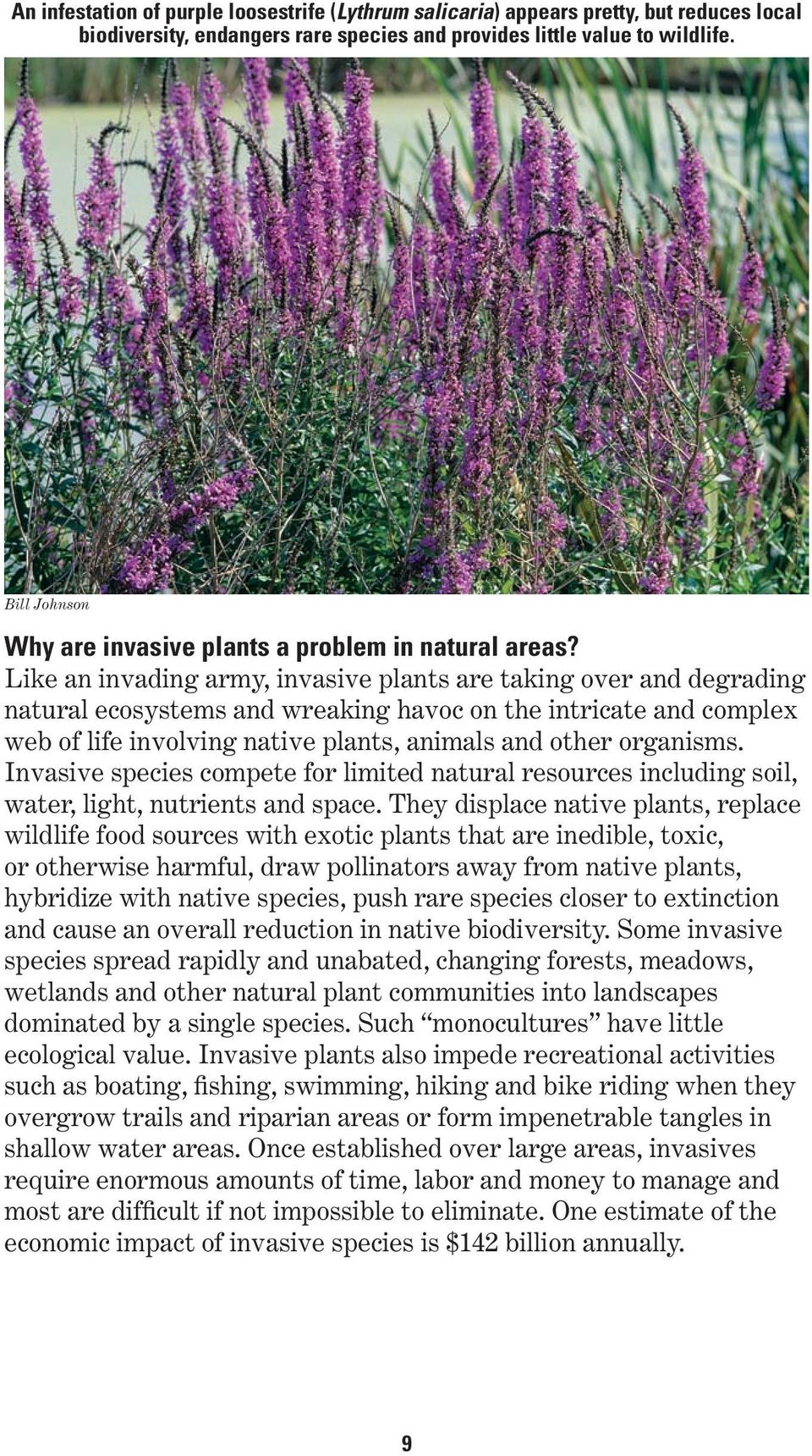 Like an invading army, invasive plants are taking over and degrading natural ecosystems and wreaking havoc on the intricate and complex web of life involving native plants, animals and other