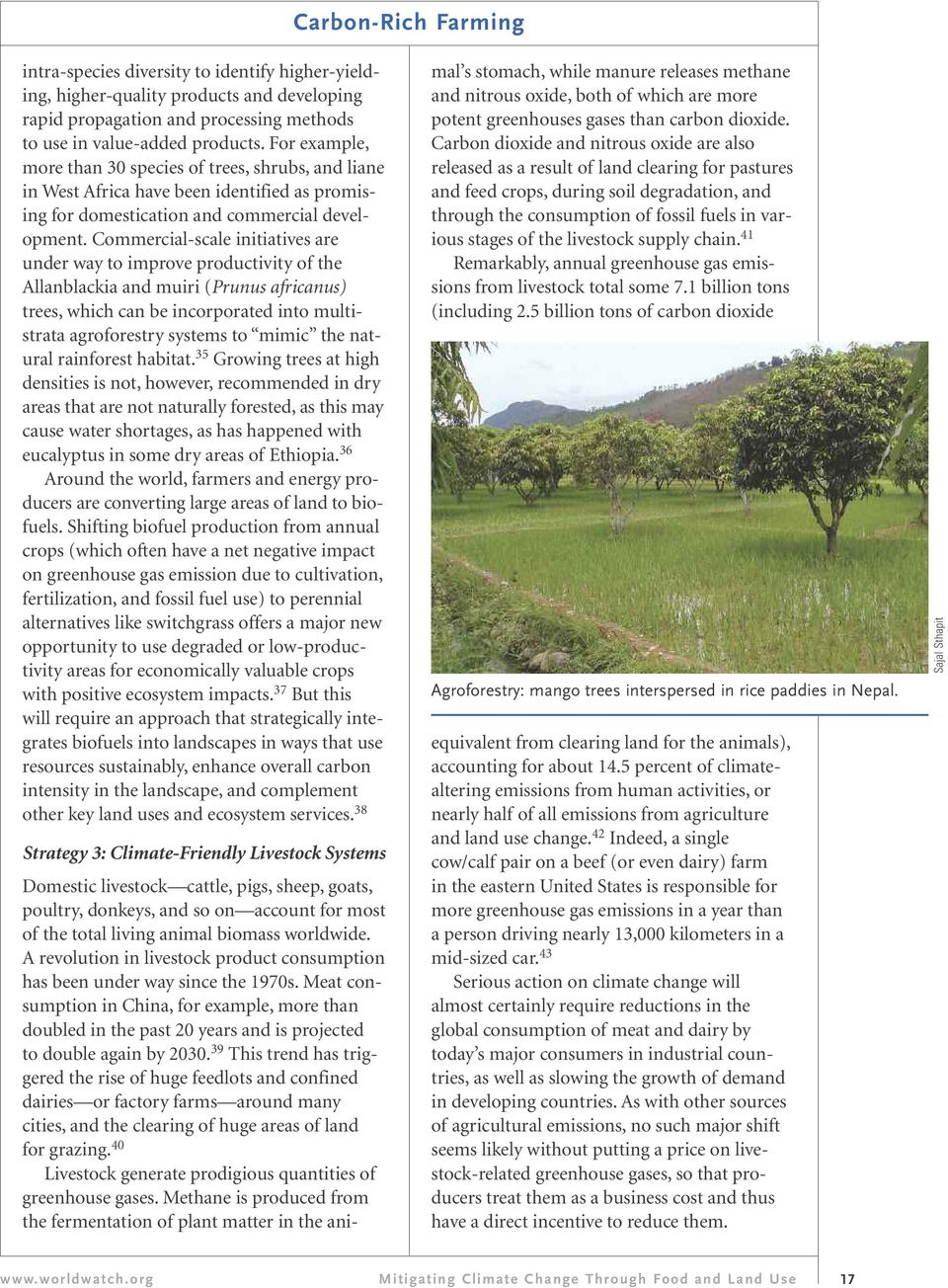 Commercial-scale initiatives are under way to improve productivity of the Allanblackia and muiri (Prunus africanus) trees, which can be incorporated into multistrata agroforestry systems to mimic the