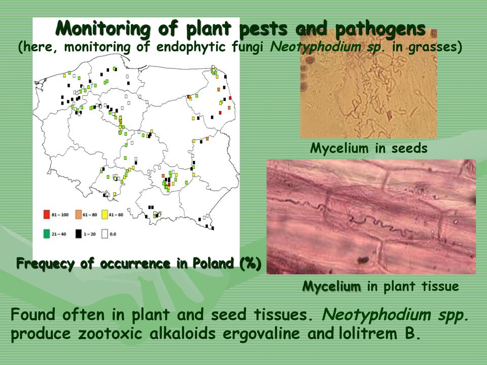 in grasses) Mycelium in seeds Frequecy of occurrence in Poland (%)