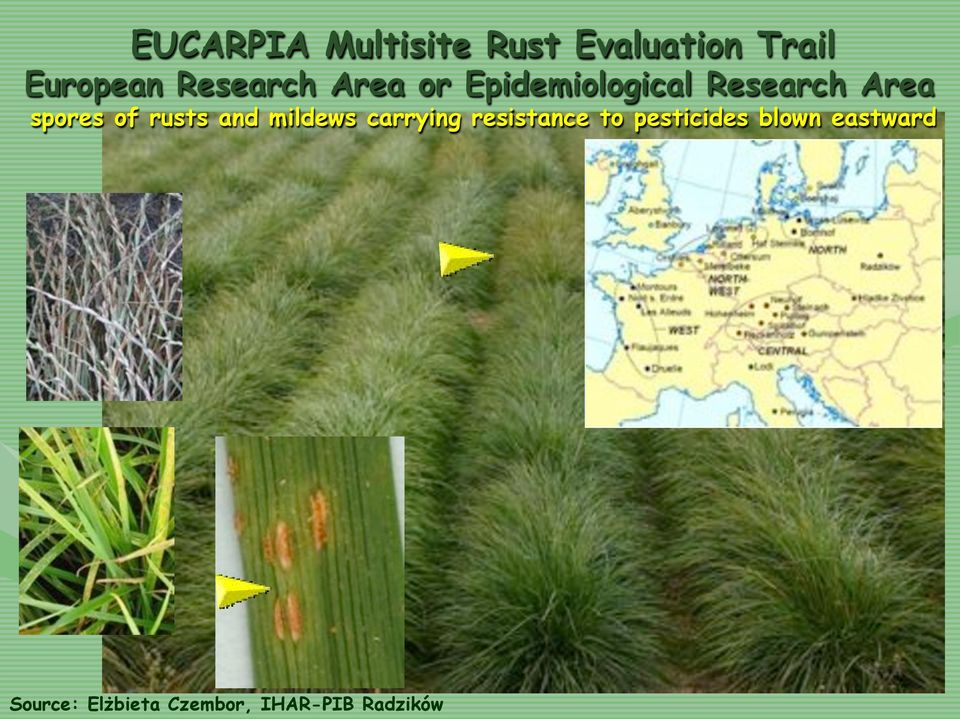 of rusts and mildews carrying resistance to pesticides