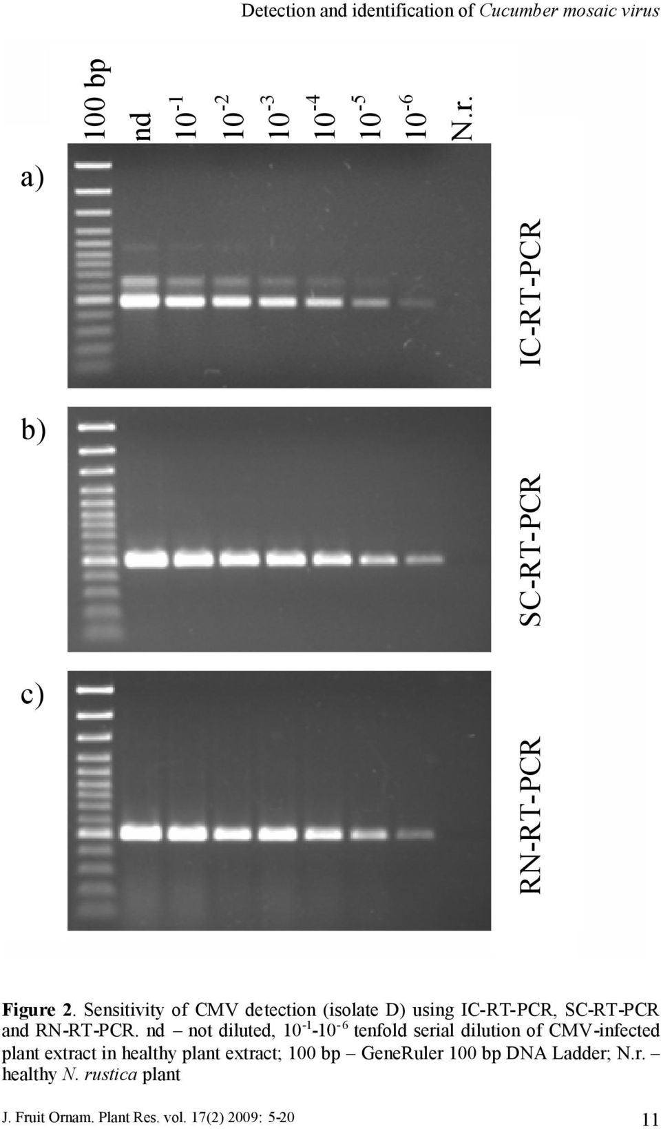 Sensitivity of CMV detection (isolate D) using IC-RT-PCR, SC-RT-PCR and RN-RT-PCR.