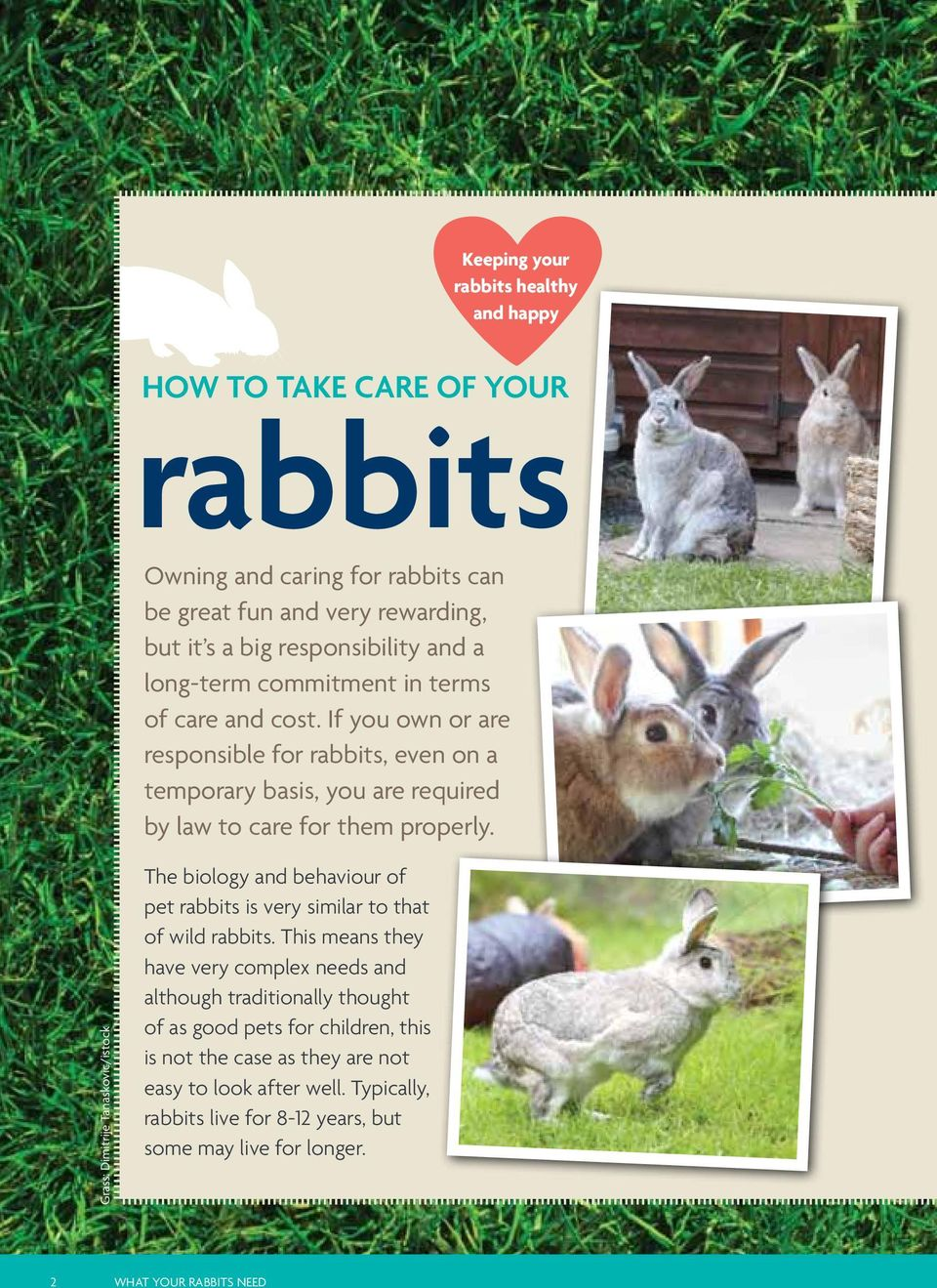 Grass: Dimitrije Tanaskovic/istock The biology and behaviour of pet rabbits is very similar to that of wild rabbits.