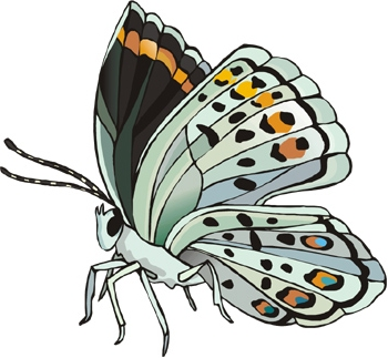 Scavenger Hunt Activity Materials: questions worksheet (pages 2-3) 18 butterfly fact cards (pages 4-8) Scissors and scotch tape Preparation: Print the fact cards and cut them apart.