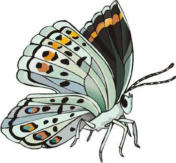 Fact Card #1 Fact Card #2 All butterflies have two antennae, four wings, and six legs. The first stage of a buttterfly's life is an egg.