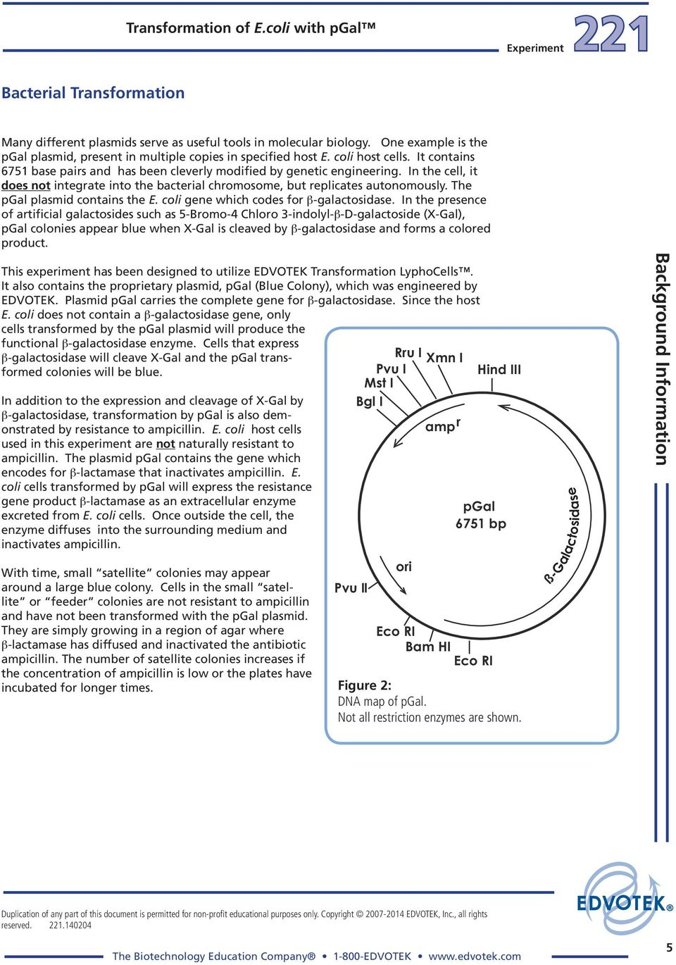 e coli transformation with plasmid pgal Introduction the transformation of bacterial cells is a useful experiment to help develop an understanding of transformation by plasmid of the effectiveness of transformation since the bacteria e coli are not naturally competent transformation pvib lab answers.