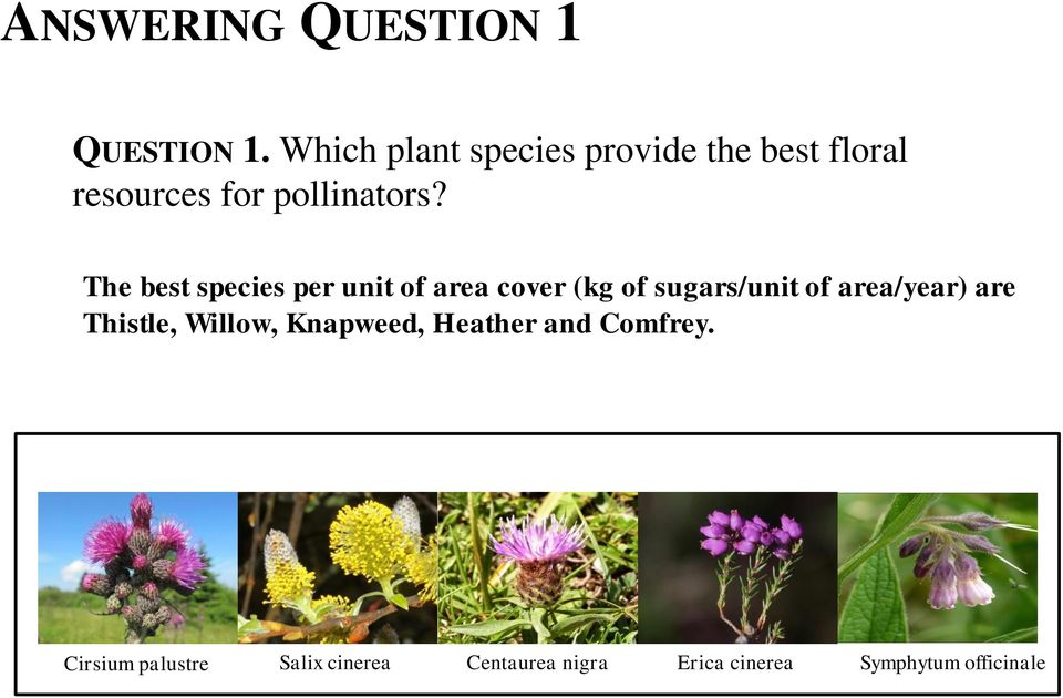 The best species per unit of area cover (kg of sugars/unit of area/year) are