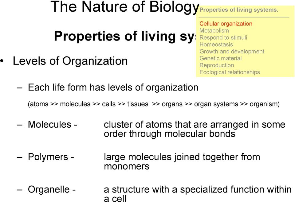 relationships (atoms >> molecules >> cells >> tissues >> organs >> organ systems >> organism) Molecules - cluster of atoms that are