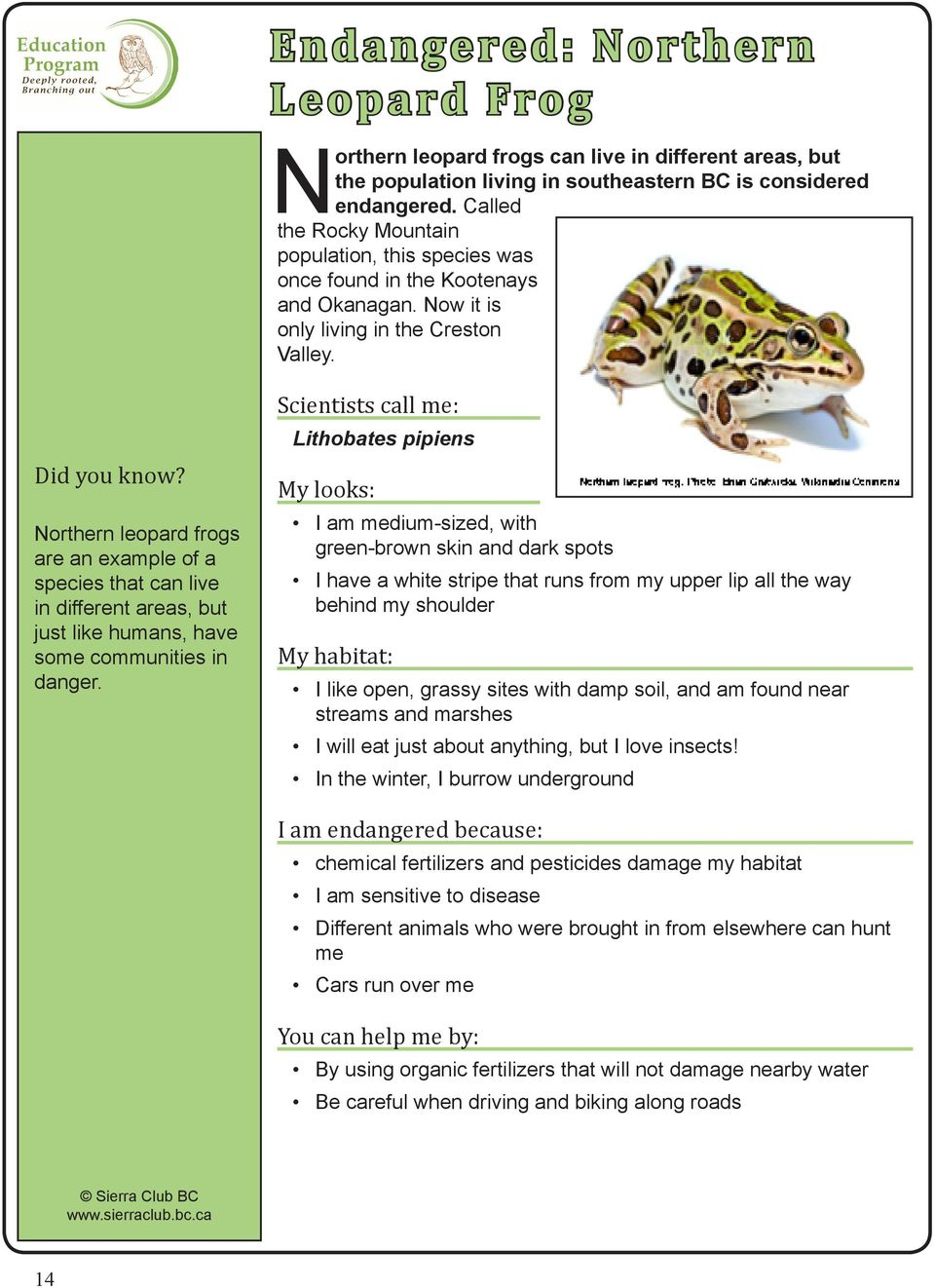 Northern leopard frogs are an example of a species that can live in different areas, but just like humans, have some communities in danger.