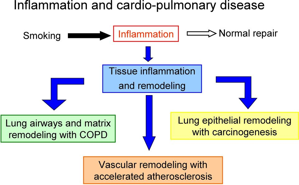 and matrix remodeling with COPD Lung epithelial remodeling with