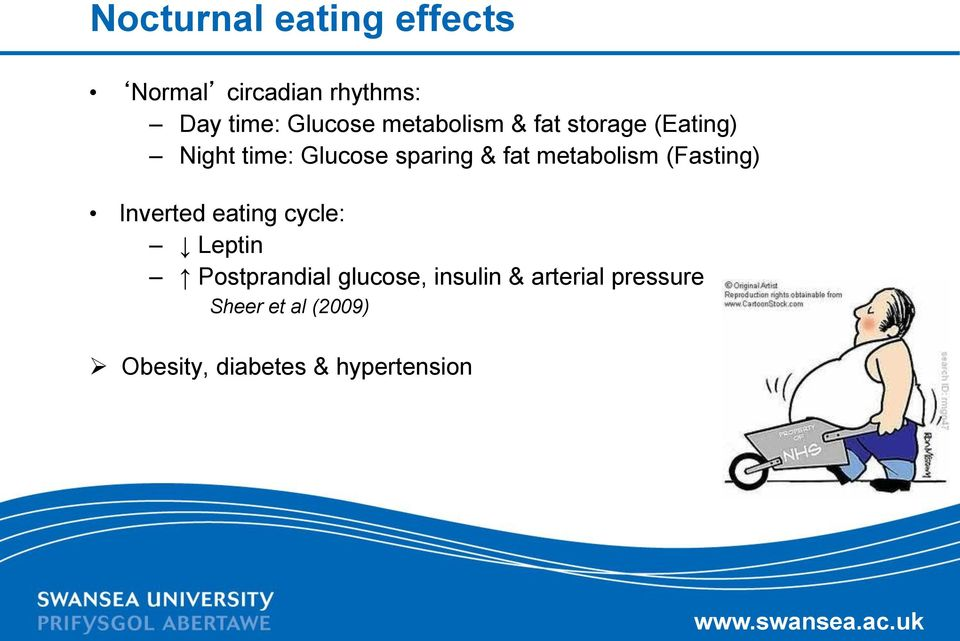 metabolism (Fasting) Inverted eating cycle: Leptin Postprandial glucose,