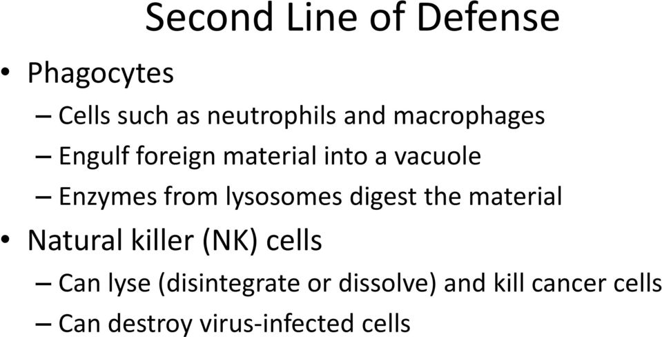 lysosomes digest the material Natural killer (NK) cells Can lyse
