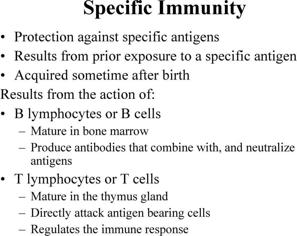 in bone marrow Produce antibodies that combine with, and neutralize antigens T lymphocytes or T