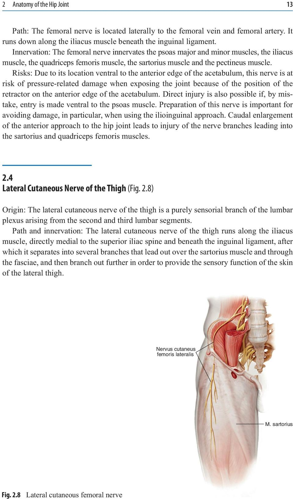 Anatomy of hip joint