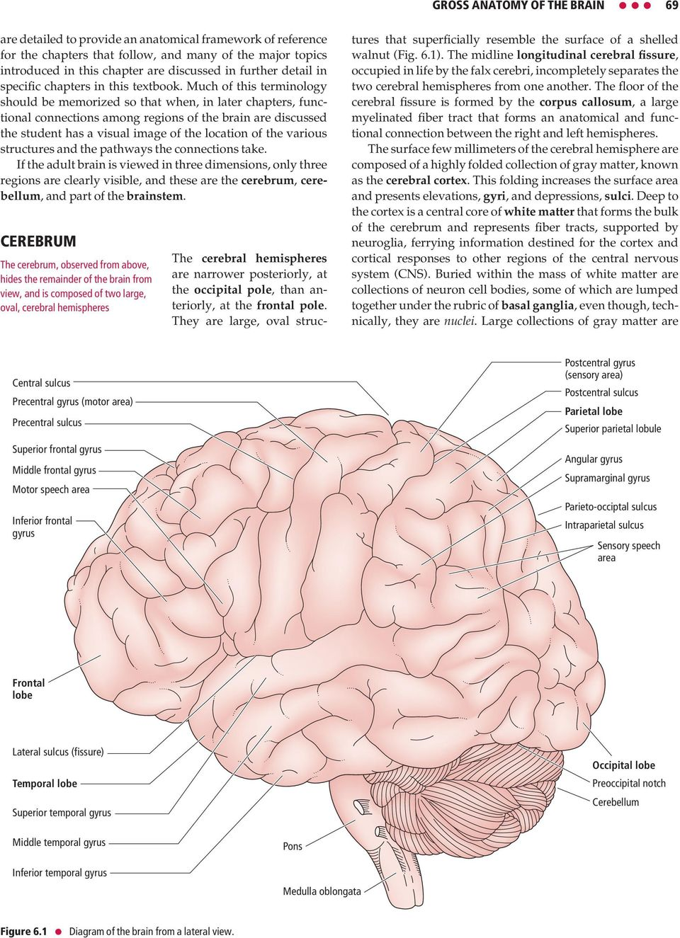 Much of this terminology should be memorized so that when, in later chapters, functional connections among regions of the brain are discussed the student has a visual image of the location of the