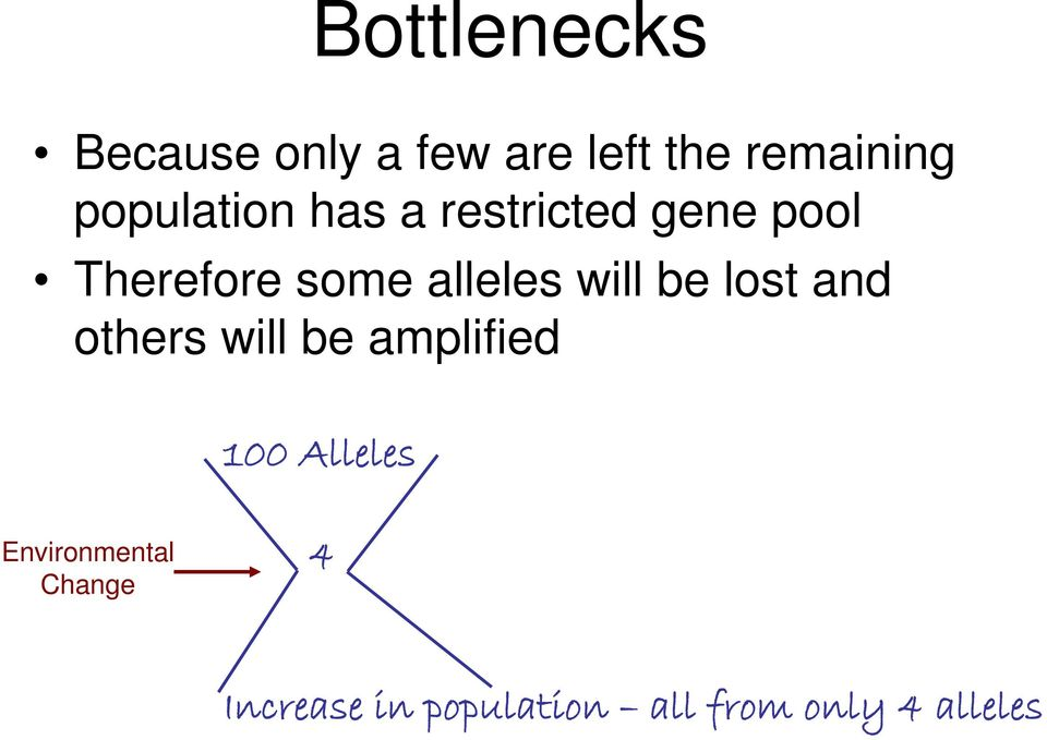 alleles will be lost and others will be amplified 100