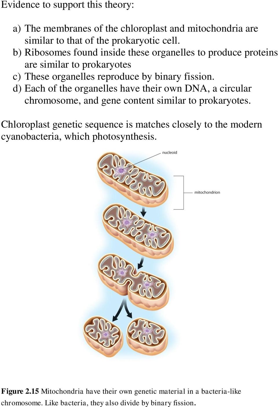 d) Each of the organelles have their own DNA, a circular chromosome, and gene content similar to prokaryotes.