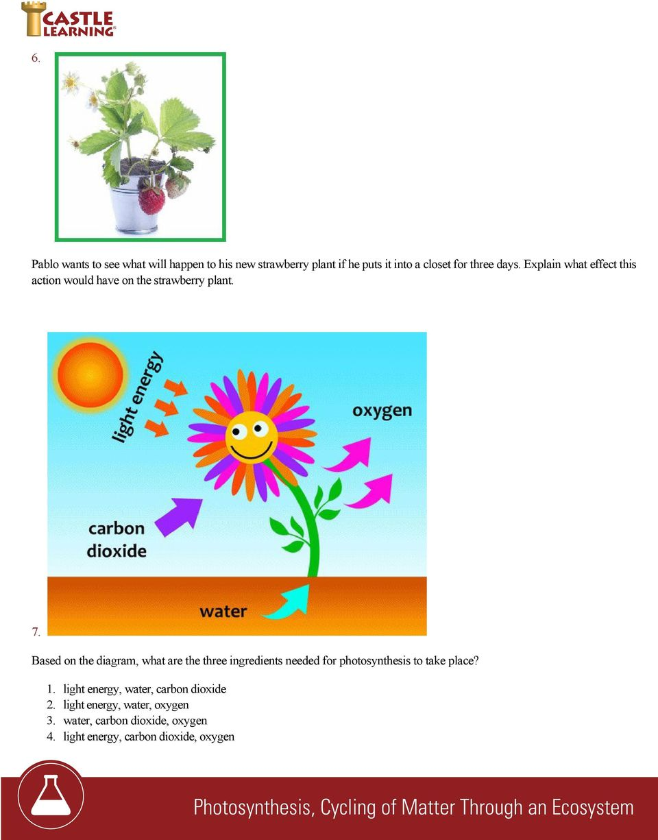 Based on the diagram, what are the three ingredients needed for photosynthesis to take place? 1.