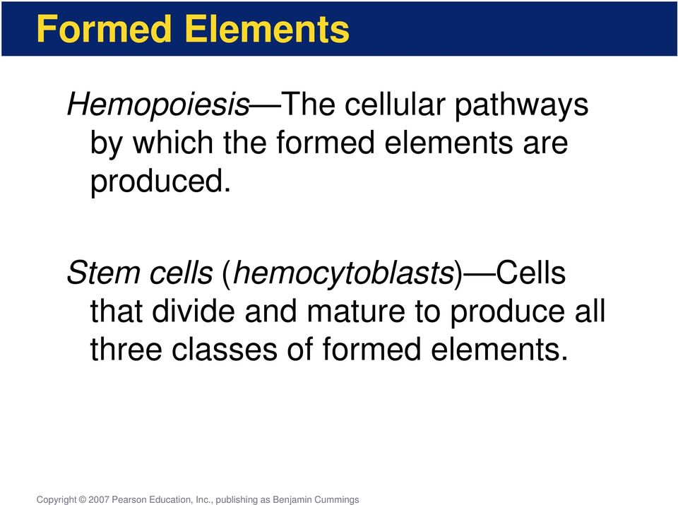 Stem cells (hemocytoblasts) Cells that divide and
