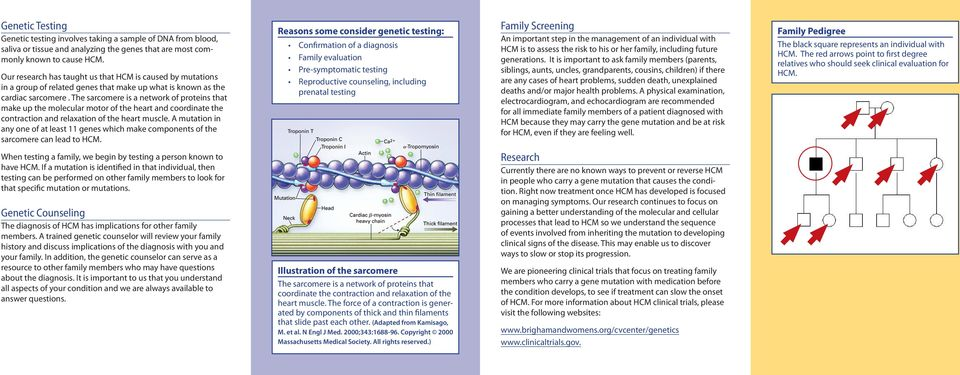 The sarcomere is a network of proteins that make up the molecular motor of the heart and coordinate the contraction and relaxation of the heart muscle.