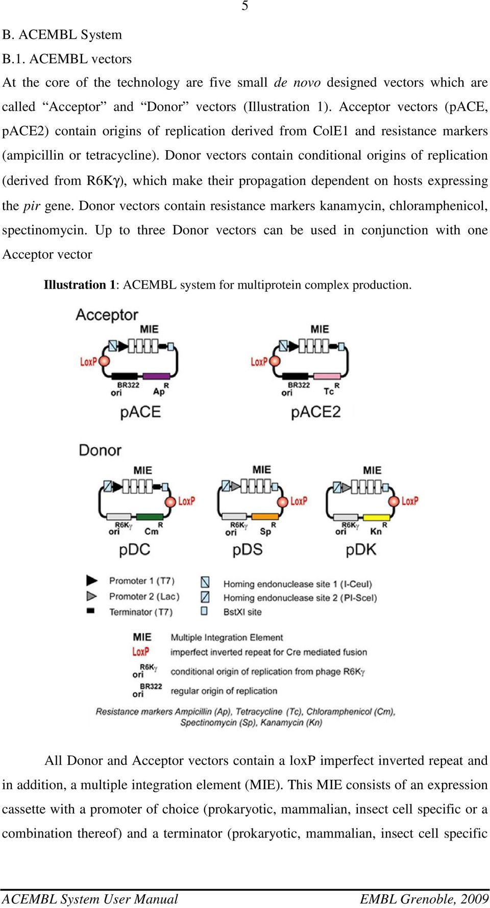 Donor vectors contain conditional origins of replication (derived from R6Kγ), which make their propagation dependent on hosts expressing the pir gene.