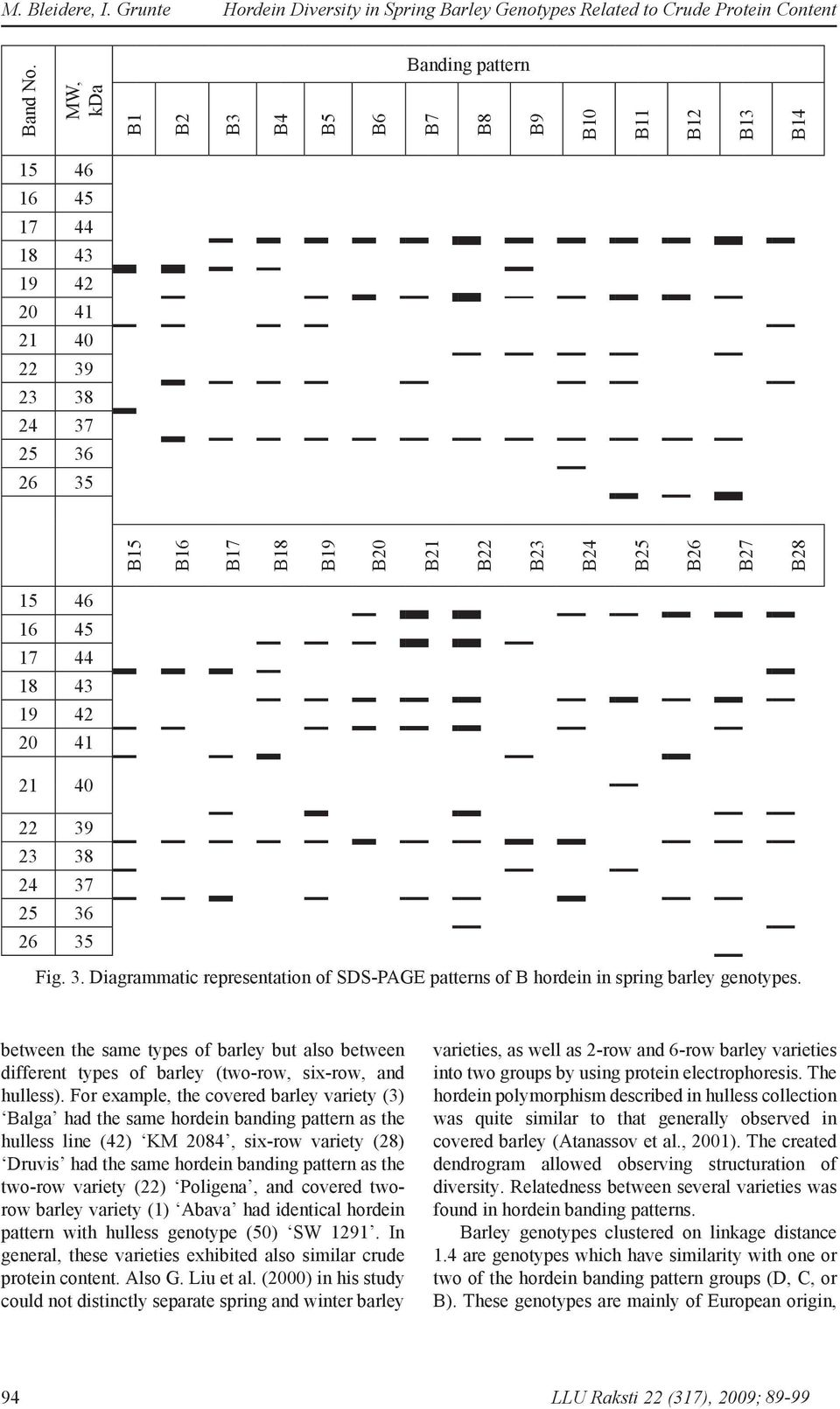 15 46 16 45 17 44 18 43 19 42 20 41 21 40 22 39 23 38 24 37 25 36 26 35 Fig. 3. Diagrammatic representation of SDS-PAGE patterns of B hordein in spring barley genotypes.