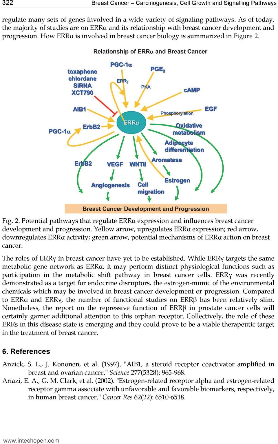 Fig. 2. Potential pathways that regulate ERR expression and influences breast cancer development and progression.