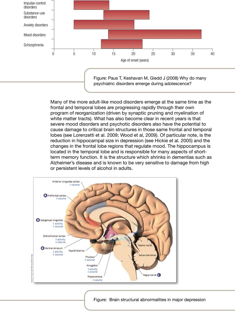 Many of the more adult-like mood disorders emerge at the same time as the frontal and temporal lobes are progressing rapidly through their own program of reorganization (driven by synaptic pruning