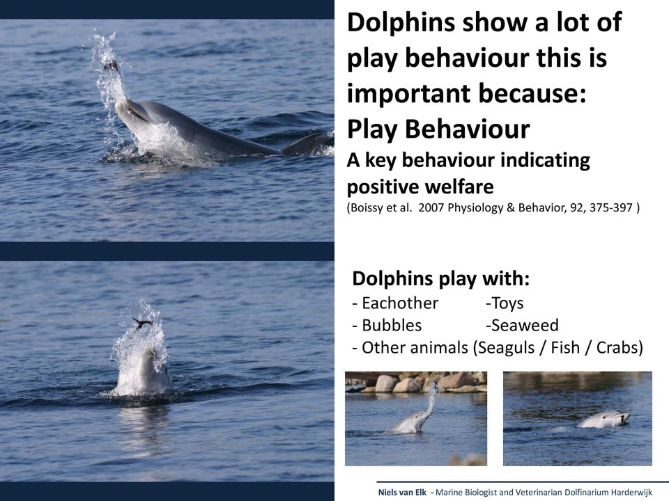 2007 Physiology & Behavior, 92, 375-397 ) Dolphins play with: - Eachother -Toys -