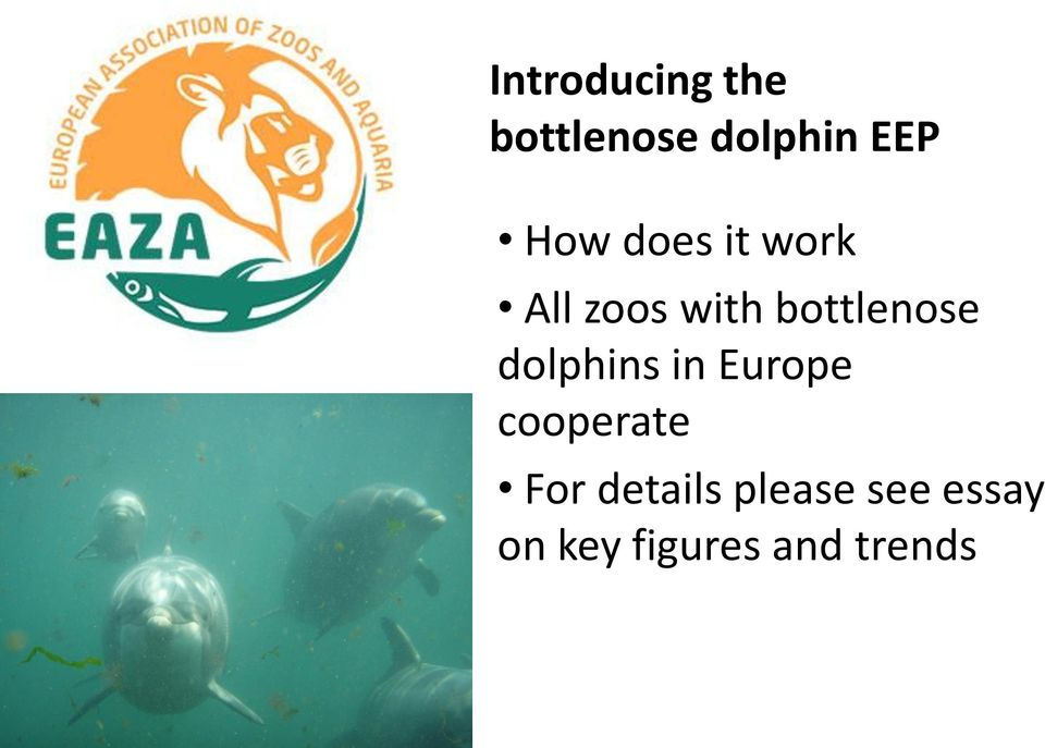 bottlenose dolphins in Europe cooperate