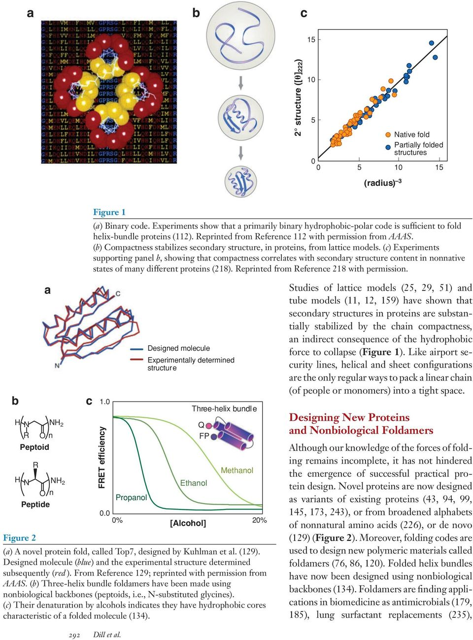 (b) Compactness stabilizes secondary structure, in proteins, from lattice models.