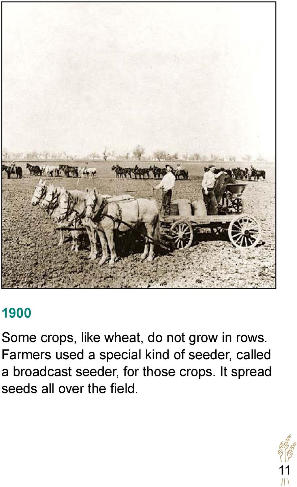 Farmers used a special kind of seeder,
