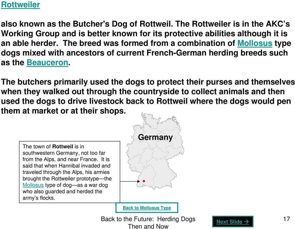 The butchers primarily used the dogs to protect their purses and themselves when they walked out through the countryside to collect animals and then used the dogs to drive livestock back to Rottweil