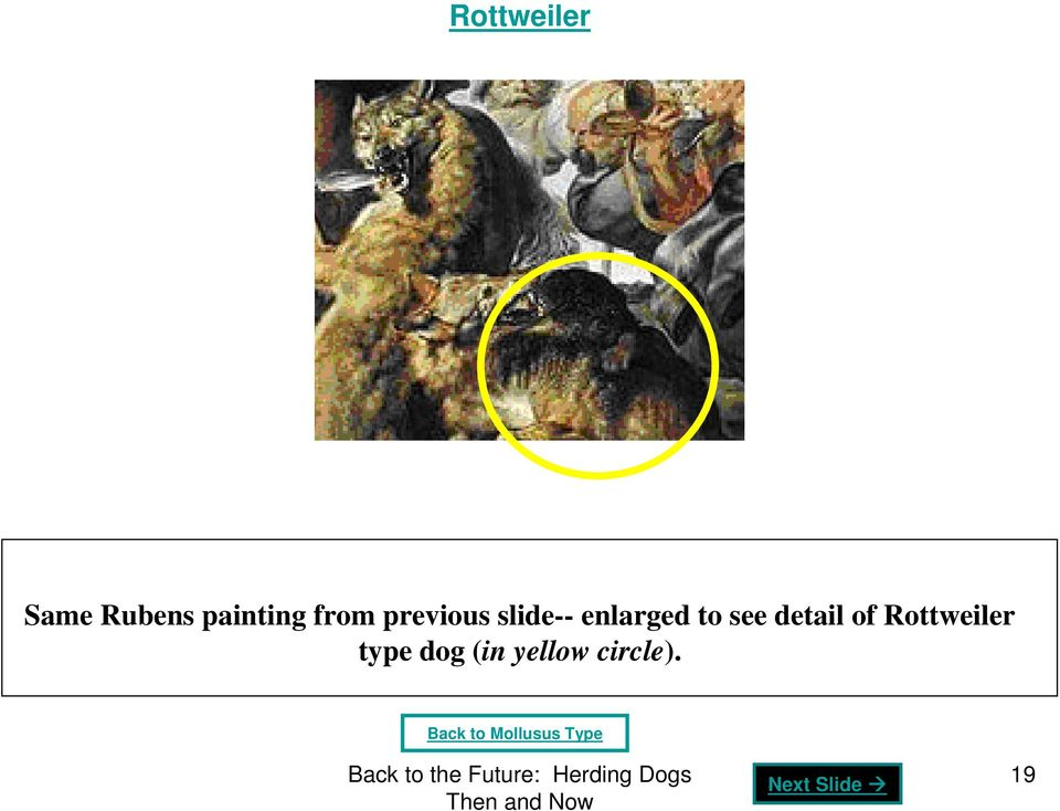 see detail of Rottweiler type dog