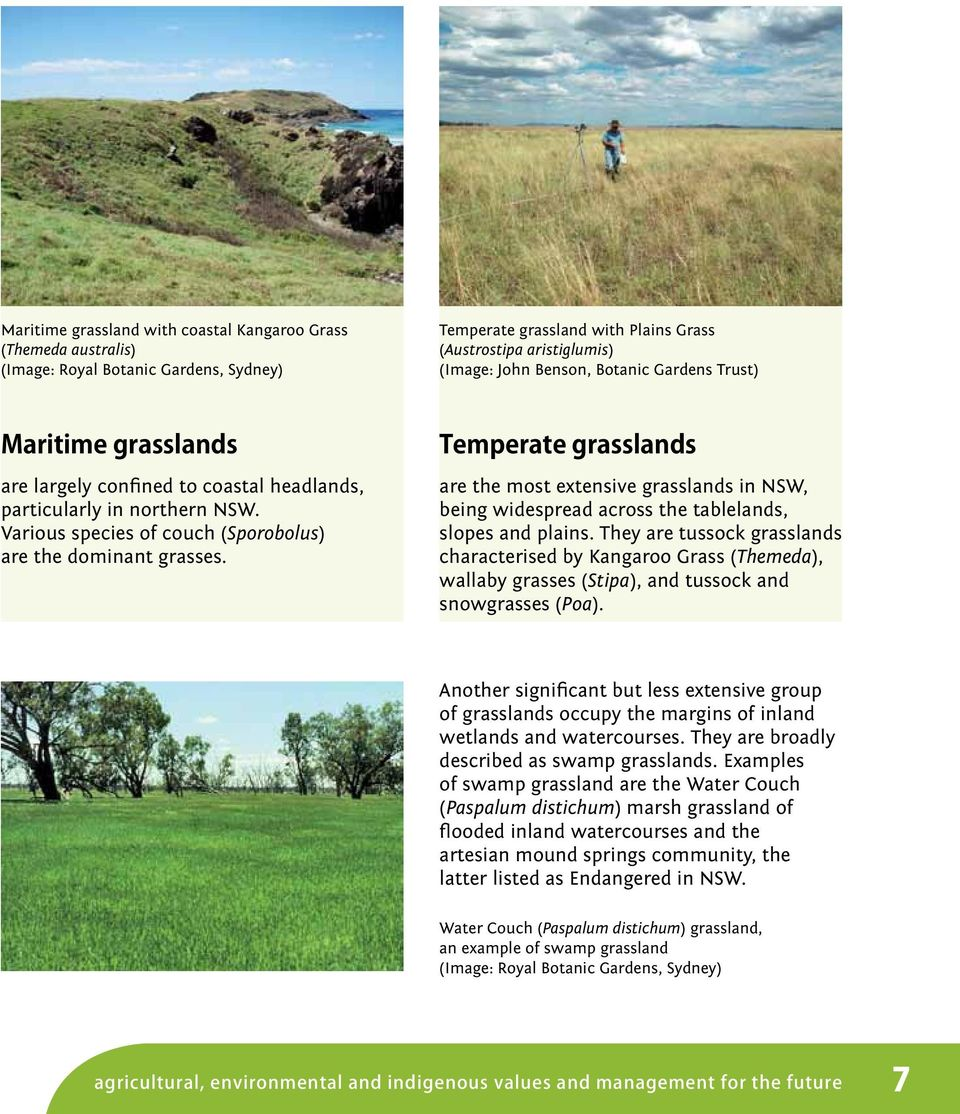 Temperate grasslands are the most extensive grasslands in NSW, being widespread across the tablelands, slopes and plains.