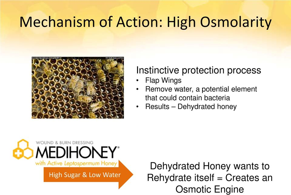 contain bacteria Results Dehydrated honey High Sugar & Low Water
