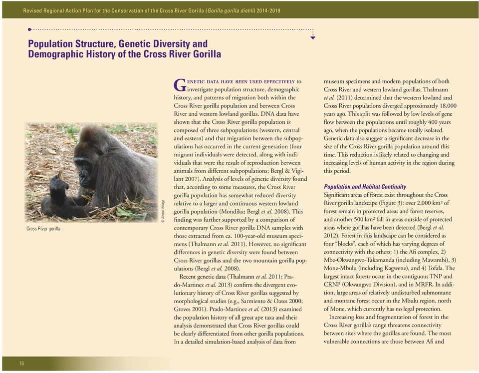 DNA data have shown that the Cross River gorilla population is composed of three subpopulations (western, central and eastern) and that migration between the subpopulations has occurred in the